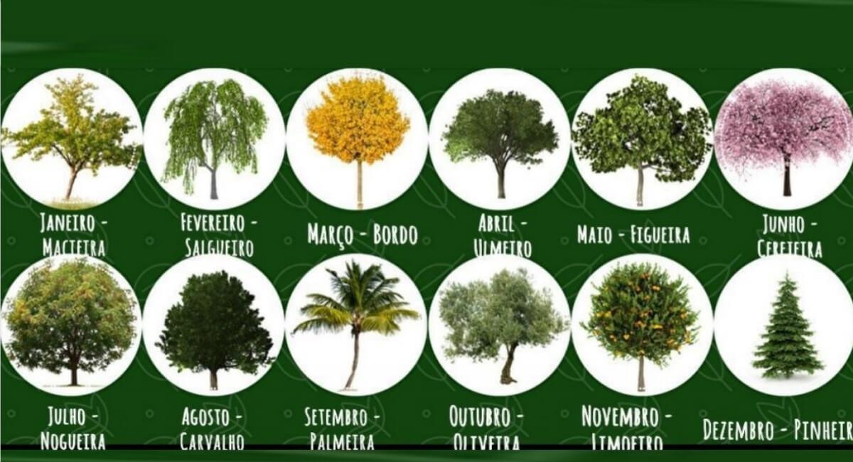 testes - Descubra o que a árvore do seu mês de nascimento revela sobre sua personalidade