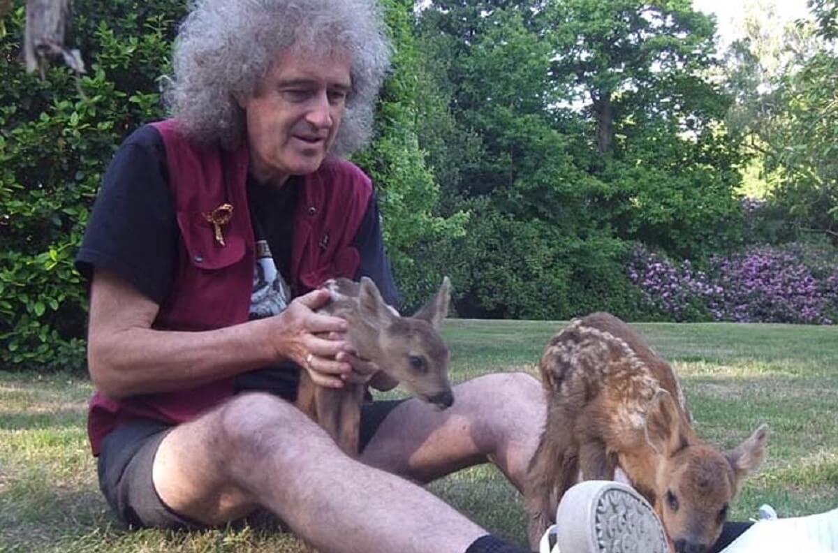Brian May capa - Guitarrista do Queen quer ser lembrado por combater a crueldade contra os animais