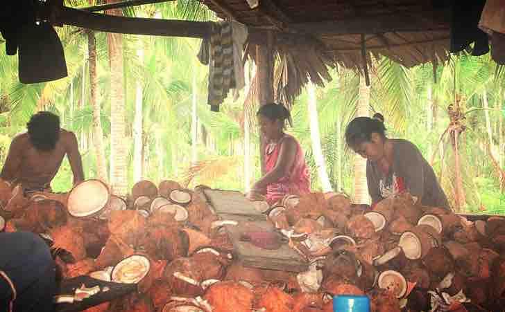 eles criaram paletes de coco que podem economizar 200 milhoes de arvores por ano2 - Paletes de coco substituem madeira e impedem corte de árvores