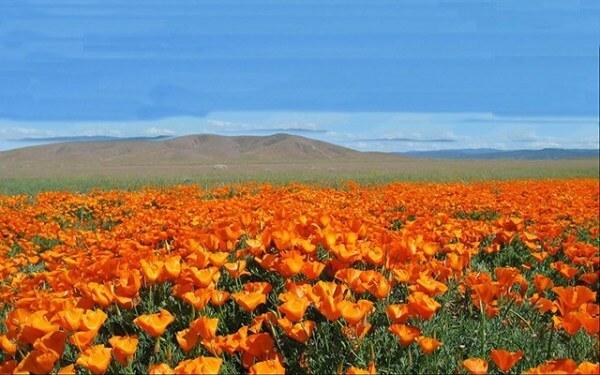maxresdefault 8 4 - Atacama em flor. A extraordinária florada no deserto mais árido do mundo!