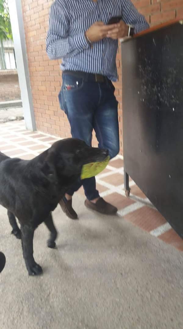 cao folha 4 - Conheça Negro, o amável cão que aprendeu comprar biscoitos