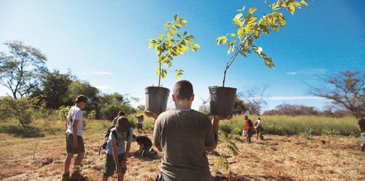 2 - Projeto de lei obriga a plantar uma árvore como requisito obrigatório para se formar na faculdade