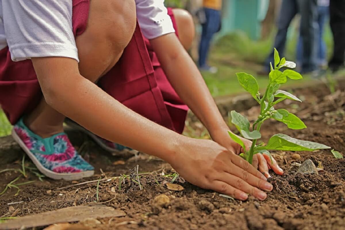 3 - Projeto de lei obriga a plantar uma árvore como requisito obrigatório para se formar na faculdade