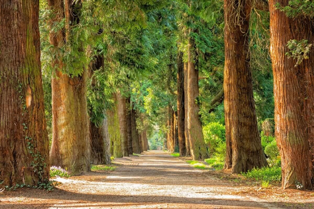 4 - Projeto de lei obriga a plantar uma árvore como requisito obrigatório para se formar na faculdade