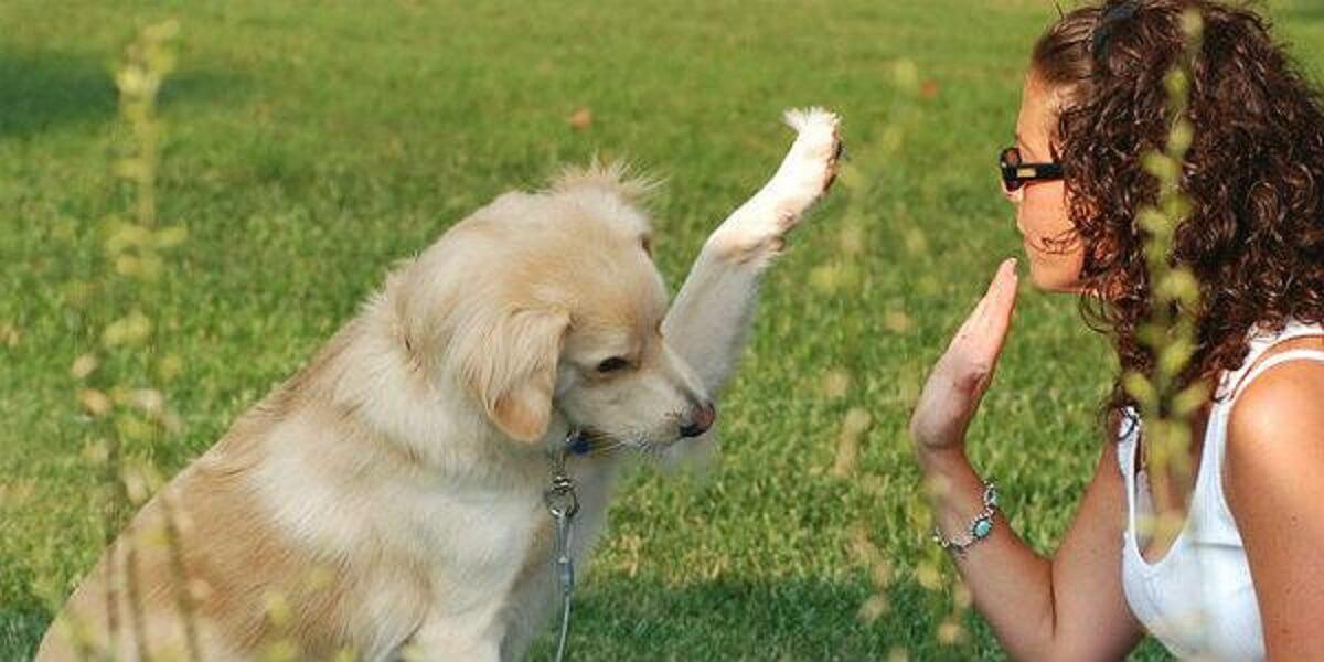 Falo com meu cão - Falar com seu pet não é loucura, significa inteligência social, conclui estudo