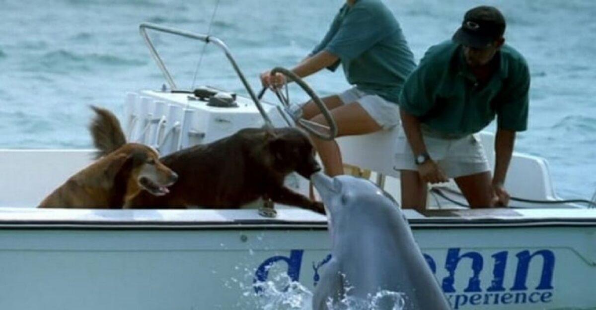 Goltino cp - Golfinho sai da água e tasca um selinho em cachorro – veja o vídeo