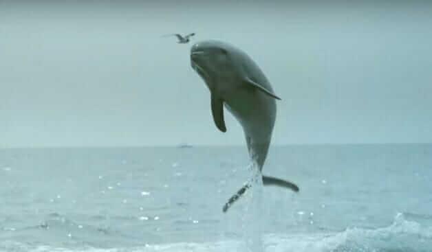golfinho 3 - Golfinho sai da água e tasca um selinho em cachorro – veja o vídeo