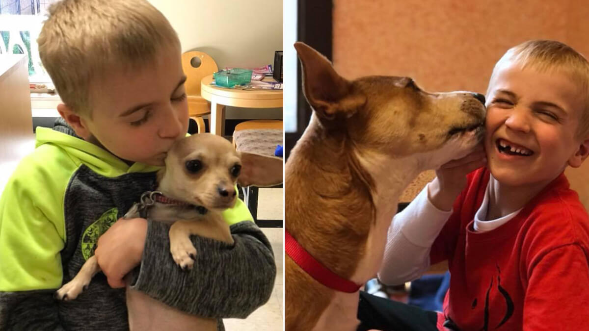 071318 dogrescue 1280x720 - Garoto de 7 anos recebe prêmio da ASPCA por ter salvo mais de 1.300 cachorros
