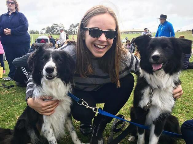 BCollies9 - Juntaram 576 Border Collies e bateram um belo recorde de fofura na Austrália