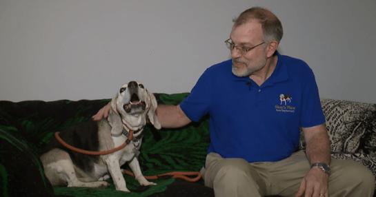 Abrigo 3 - Aposentado abre abrigo para cães idosos abandonados