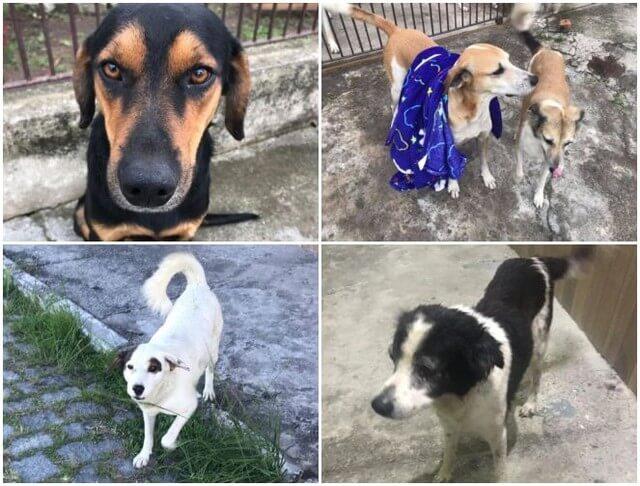 """Cãodominio 5 - Vizinhança se junta e criam """"cãodomínio"""" um abrigo que recebe animais de rua no RJ"""