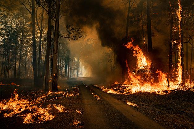 Coala incêndios 1 - Coalas estão condenados à extinção devido aos incêndios na Austrália, afirmam pesquisadores