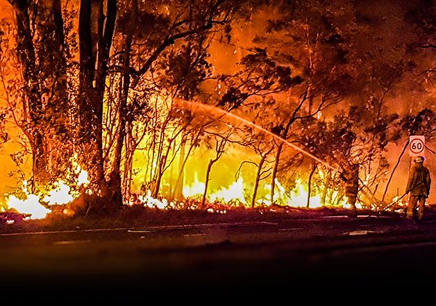 Coala incêndios 5 - Coalas estão condenados à extinção devido aos incêndios na Austrália, afirmam pesquisadores
