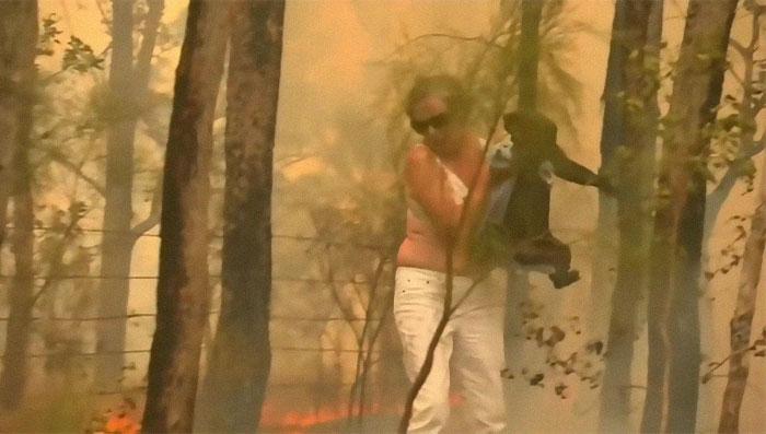 Mulher salva coala 3 - Mulher salva coala chamuscado e desesperado em incêndio