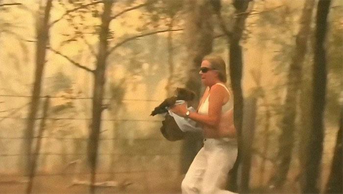 Mulher salva coala 4 - Mulher salva coala chamuscado e desesperado em incêndio