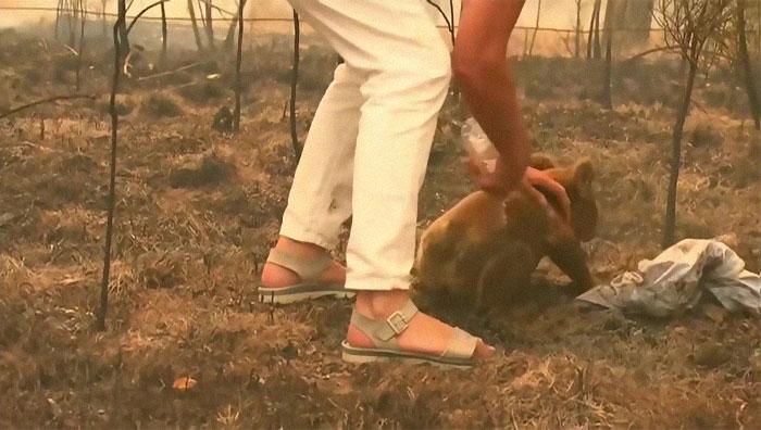 Mulher salva coala 6 - Mulher salva coala chamuscado e desesperado em incêndio