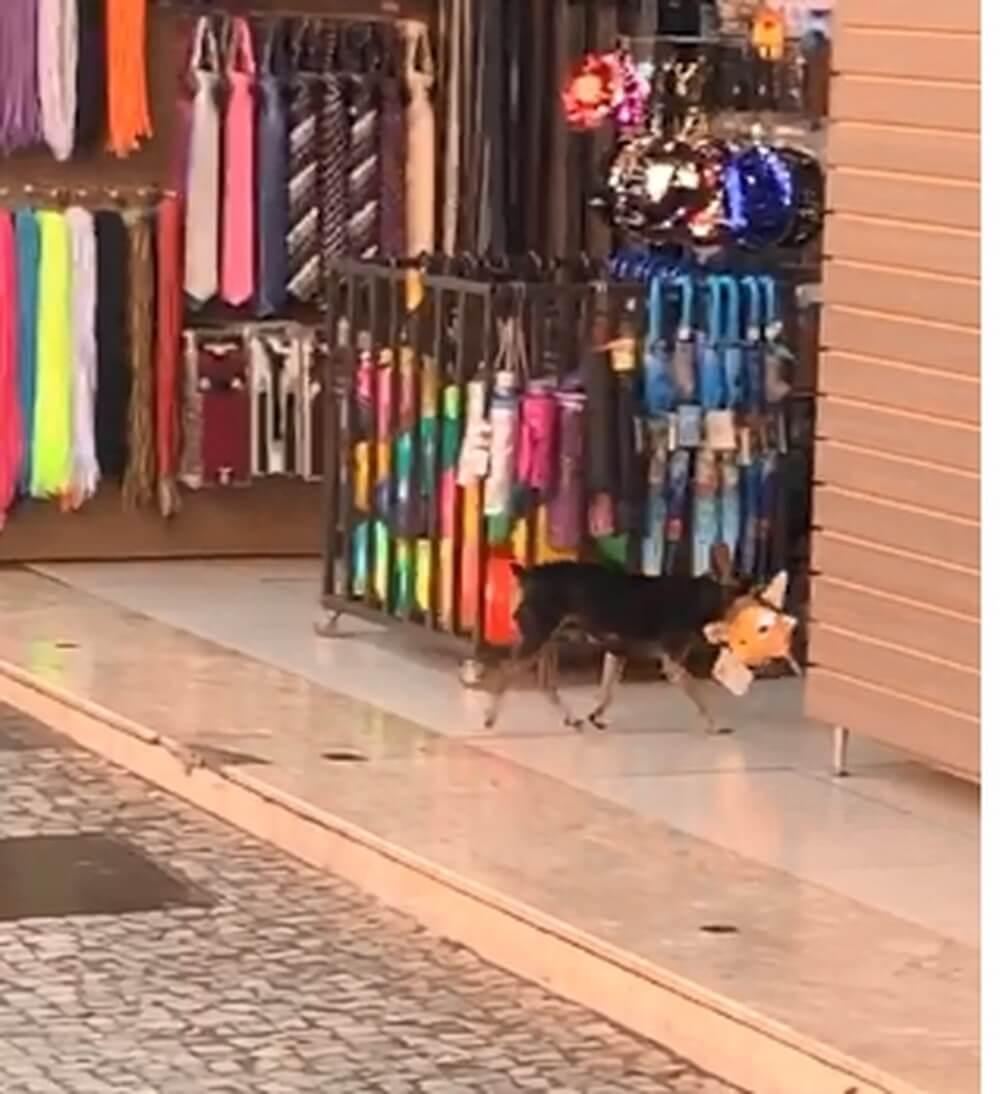"""cachorro 2 - Cachorro """"rouba"""" bichinho de pelúcia em loja e o vídeo viralizou na web"""
