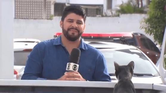 """gatinho peralta - Repórter da Rede Globo tenta trabalhar e é parado por um """"ataque fofo"""""""