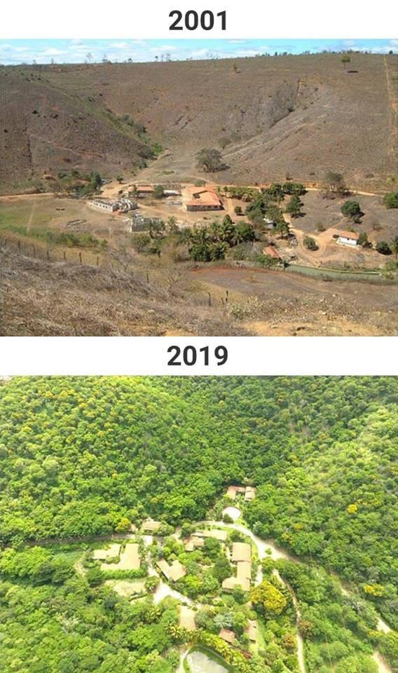 2 1 - Casal brasileiro reflorestou área de 600 hectares para dar moradia a 500 espécies em fase de extinção