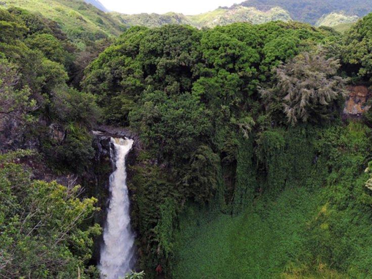 4 1 - Casal brasileiro reflorestou área de 600 hectares para dar moradia a 500 espécies em fase de extinção
