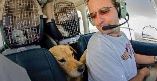eutanasia 3 - Homem comprou avião para salvar da eutanásia cães e gatos