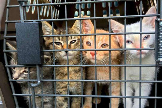 eutanasia 5 - Homem comprou avião para salvar da eutanásia cães e gatos