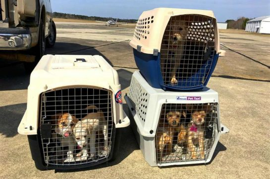 eutanasia 6 - Homem comprou avião para salvar da eutanásia cães e gatos