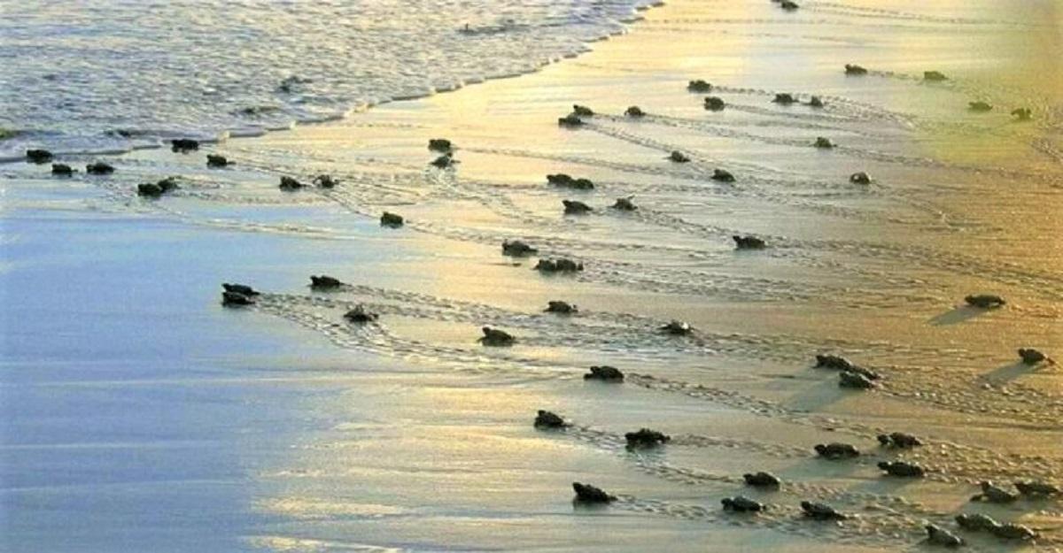 not proposal 100 768x400 1 - Projeto Tamar celebra 40 anos e já soltou 40 milhões de tartarugas!
