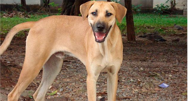 o vira lata - 'Brasileiro não ama pet, ama pedigree'. Tweet contesta que 'vira-latas' não são adotados