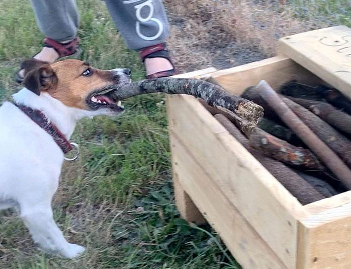 stick library dogs andrew taylor 1 5df789c69ceb9 700 - Homem construiu uma biblioteca para cães.