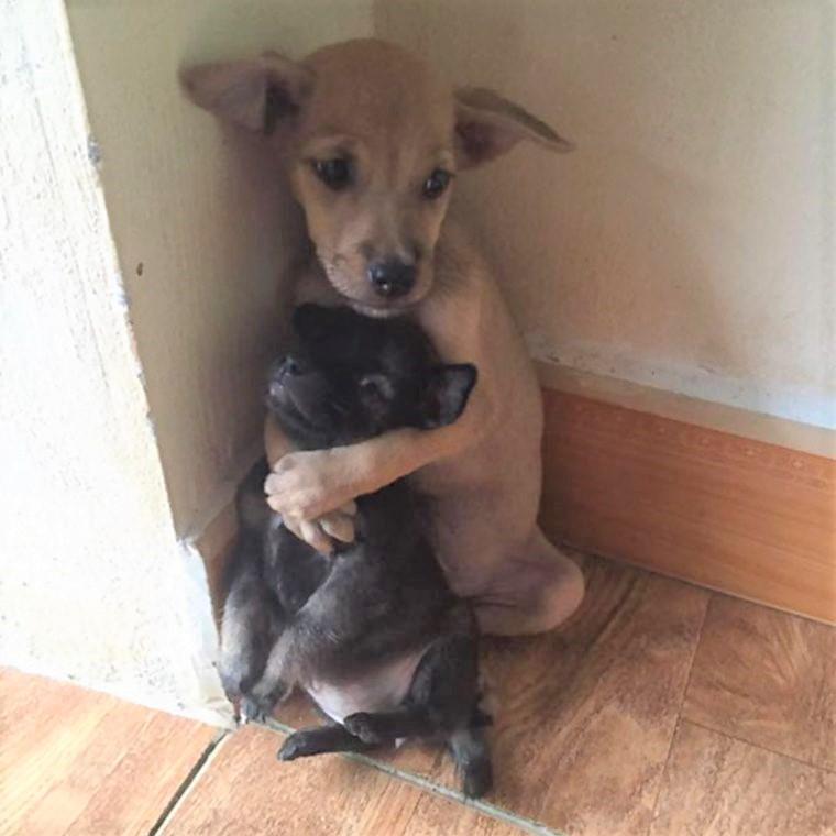1 - Cãezinhos continuam abraçados o tempo todo mesmo após serem resgatados