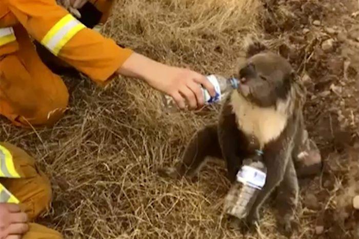 2 5e14419bd9ce3  700 - Robert Irwin luta para conter as lágrimas enquanto discute o impacto dos incêndios na Austrália