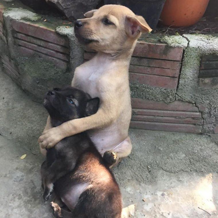 2 - Cãezinhos continuam abraçados o tempo todo mesmo após serem resgatados