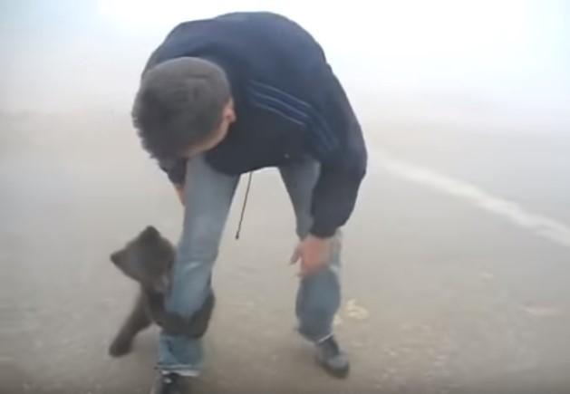 24376 2 - Filhotinho de urso abraça sem parar o homem que o salvou de incêndio no bosque (Vídeo)