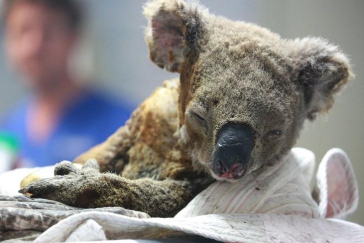 3 3 - Filhote de canguru queimado é ajudado por uma criança