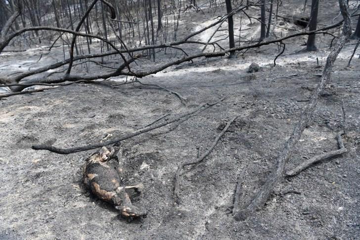 4 3 - Filhote de canguru queimado é ajudado por uma criança