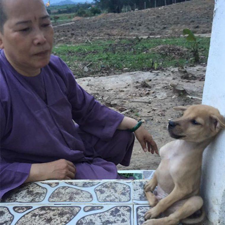 4 - Cãezinhos continuam abraçados o tempo todo mesmo após serem resgatados