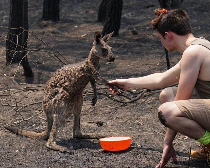 5 1 - Filhote de canguru queimado é ajudado por uma criança