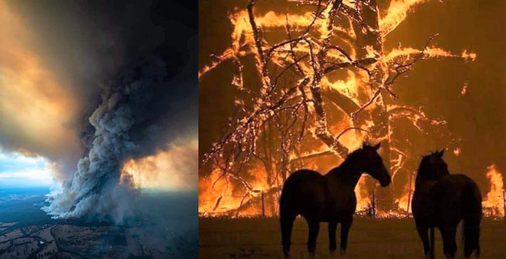 Austrália arde em chamas 1 - Austrália é destruída aos poucos pelos incêndios florestais que se espalham; descubra as causas (VÍDEO)