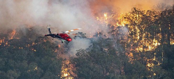 Captura de Pantalla 2020 01 02 a las 16.48.04 - Voluntários na Austrália arriscam suas vidas pelos animais.