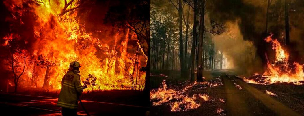 Incêndios Australia 2 - Subiu para 23 o número de mortos devido aos incêndios florestais na Austrália
