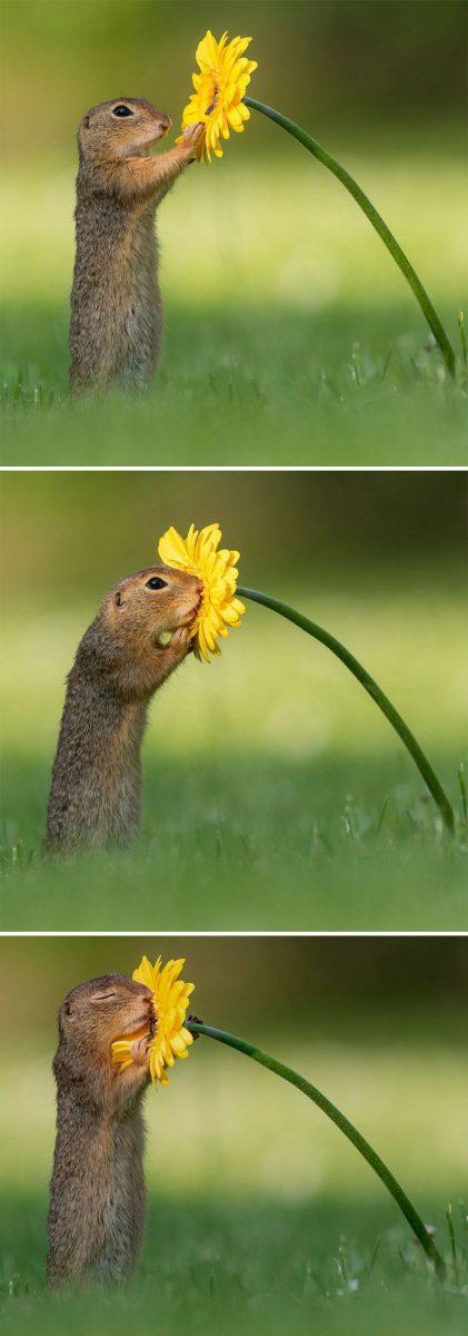 animals photography dick van dujin 1 scaled - Fotógrafo captura momentos preciosos do que acontece na natureza quando ninguém está por perto (30 fotos)
