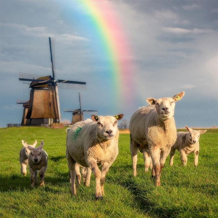 animals photography dick van dujin 10 - Fotógrafo captura momentos preciosos do que acontece na natureza quando ninguém está por perto (30 fotos)