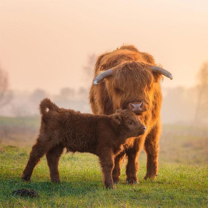 animals photography dick van dujin 12 - Fotógrafo captura momentos preciosos do que acontece na natureza quando ninguém está por perto (30 fotos)
