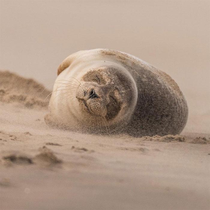 animals photography dick van dujin 16 - Fotógrafo captura momentos preciosos do que acontece na natureza quando ninguém está por perto (30 fotos)