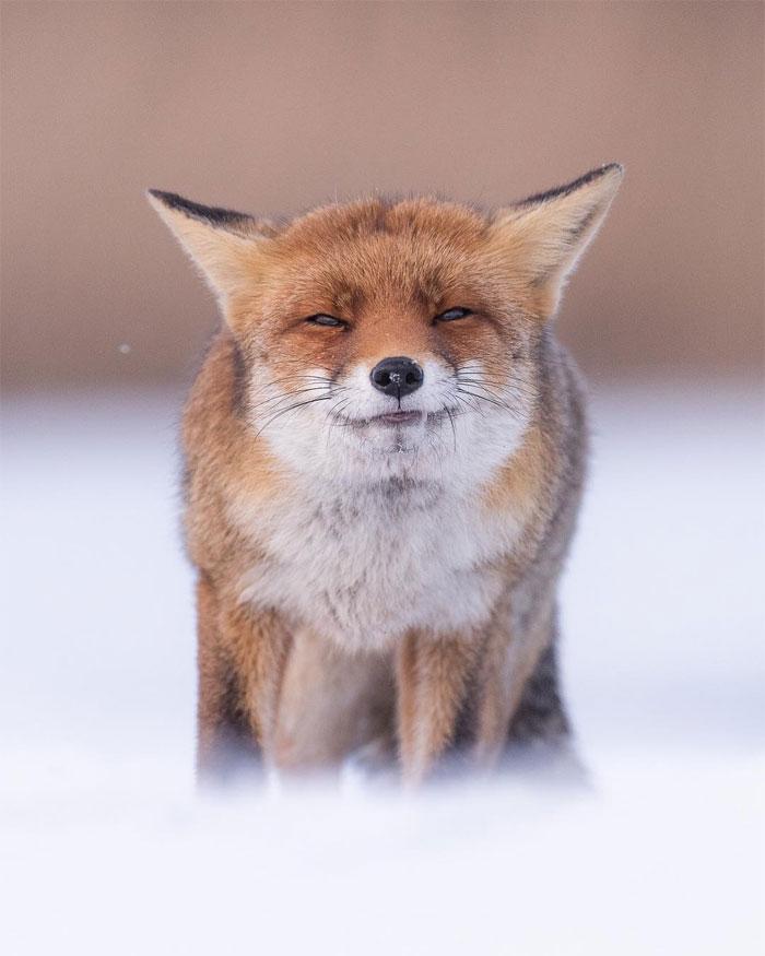 animals photography dick van dujin 18 - Fotógrafo captura momentos preciosos do que acontece na natureza quando ninguém está por perto (30 fotos)