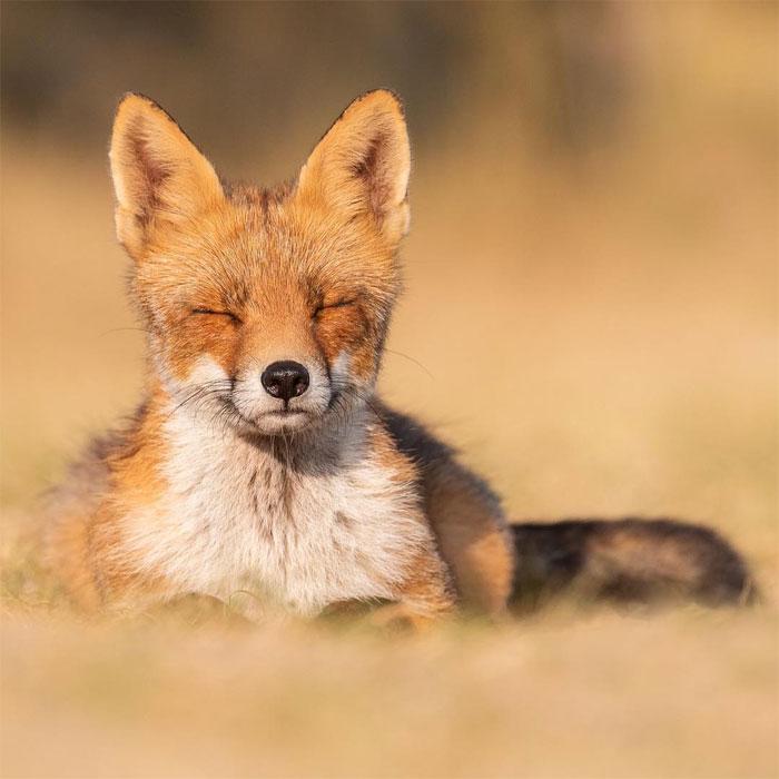 animals photography dick van dujin 2 - Fotógrafo captura momentos preciosos do que acontece na natureza quando ninguém está por perto (30 fotos)
