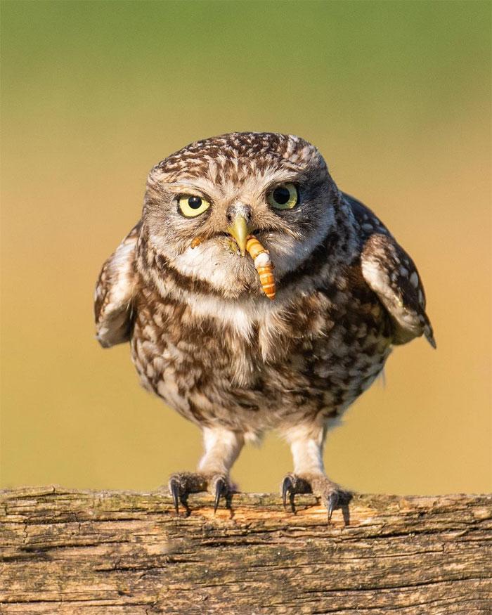 animals photography dick van dujin 20 - Fotógrafo captura momentos preciosos do que acontece na natureza quando ninguém está por perto (30 fotos)