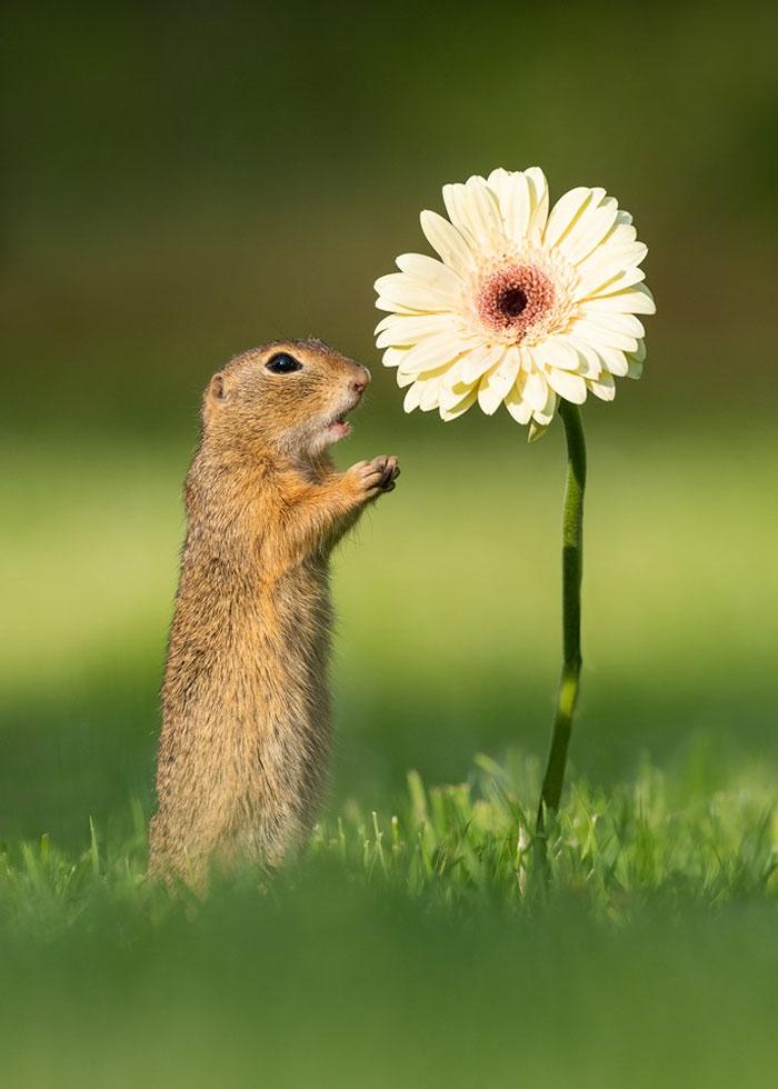 animals photography dick van dujin 27 - Fotógrafo captura momentos preciosos do que acontece na natureza quando ninguém está por perto (30 fotos)