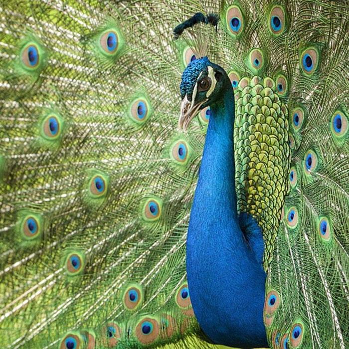 animals photography dick van dujin 29 - Fotógrafo captura momentos preciosos do que acontece na natureza quando ninguém está por perto (30 fotos)